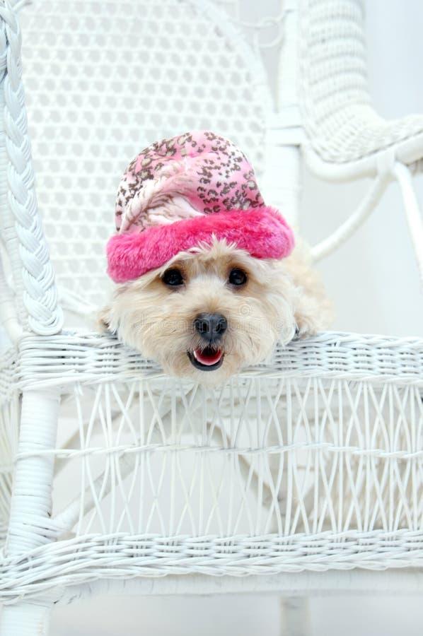 Adorabile nel colore rosa fotografie stock