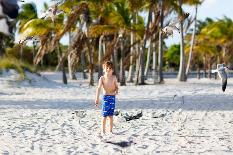 Adorable active little kid boy having fun on Miami beach, Key Biscayne. Happy cute child feeding seagull birds on sunny. Warm day near palms royalty free stock photos