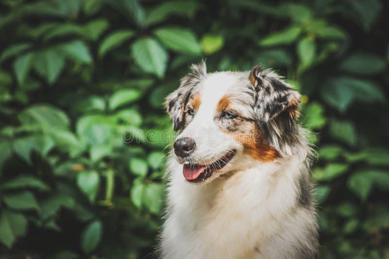 Adorable, adult, alaskan, animal, breed, canino, coat, colourful, companion, cute, dog, domestic, field, friends, friendship, funn stock image