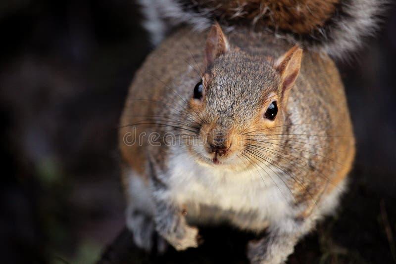 Adorable, Animal, Brown royalty free stock image
