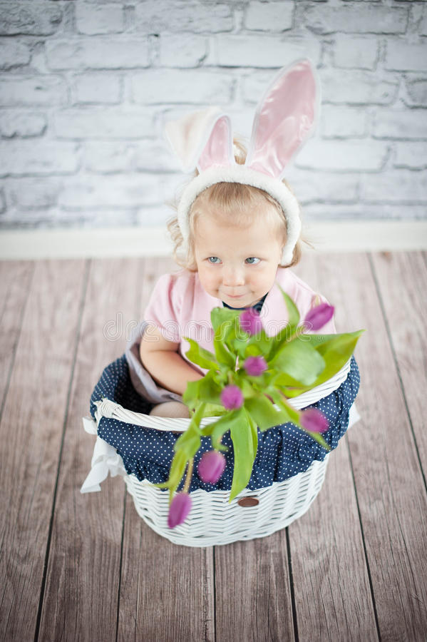 Adorable baby bunny stock images