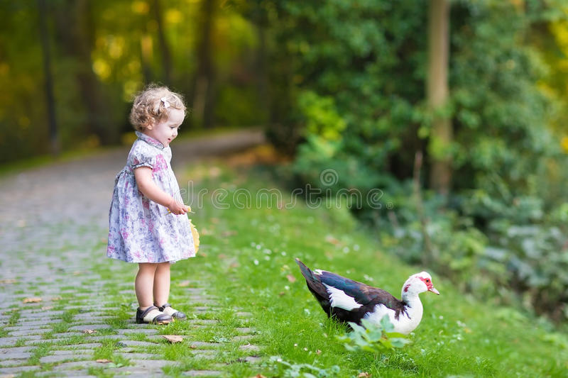 Adorable baby girl in festive dress with wild duck stock photo