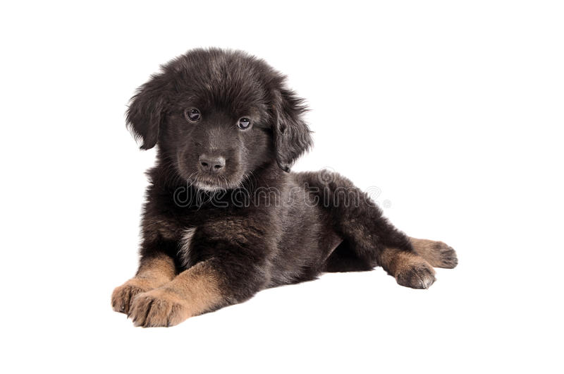 Adorable Black And Brown Fluffy Puppy On White Stock Photo ...