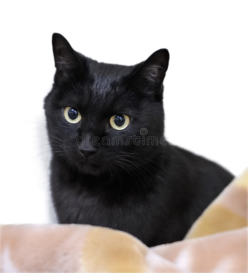 Free Adorable Black Cat Stock Image - 9711291