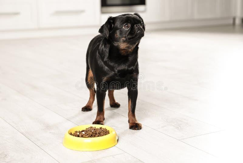 Adorable black Petit Brabancon dog with feeding bowl on floor stock images