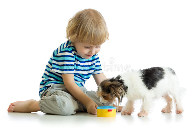 Adorable boy feeding a puppy royalty free stock image