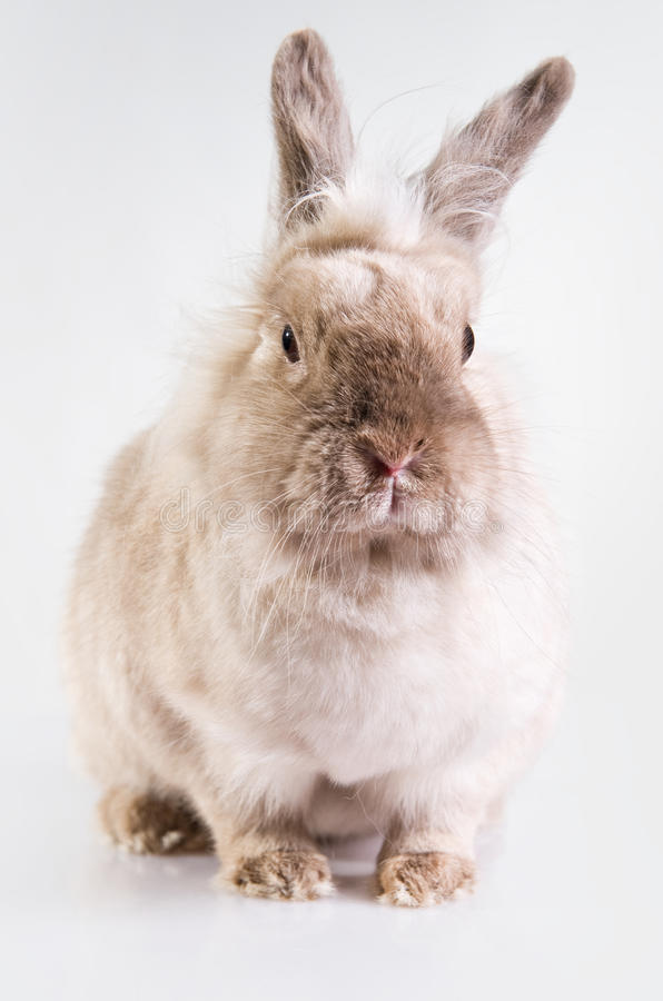Download Adorable bunny stock photo. Image of snout, cute, alone - 23146366