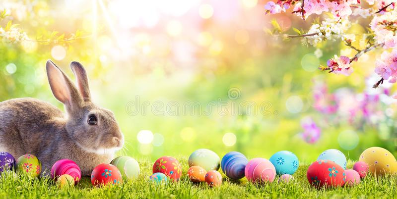 Adorable Bunny With Easter Eggs. In Flowery Meadow stock photos