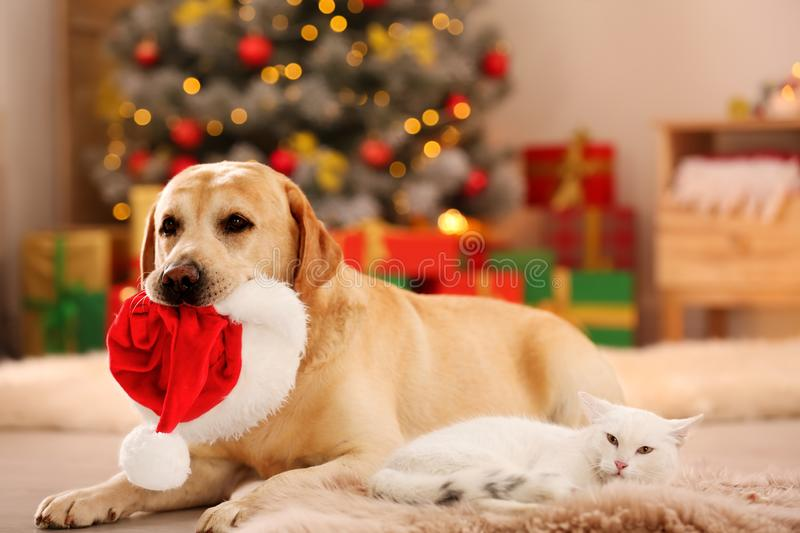 Adorable cat and dog with Christmas hat together. Cute pets stock image
