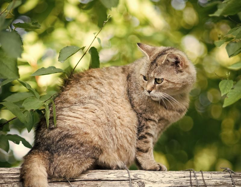 Adorable cat with furry coat sit on fence royalty free stock photography