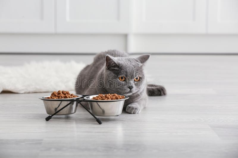 Adorable cat near bowls with food at home royalty free stock photo