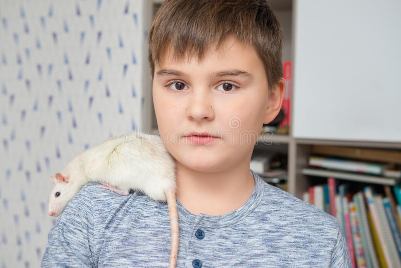 Caucasian boy with his pet, hand rat on his shoulder. Pets and childhood, care of animals, education of responsibility to royalty free stock photos