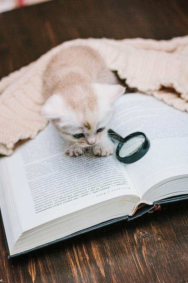 Adorable chaton gris sur un livre de papier images libres de droits