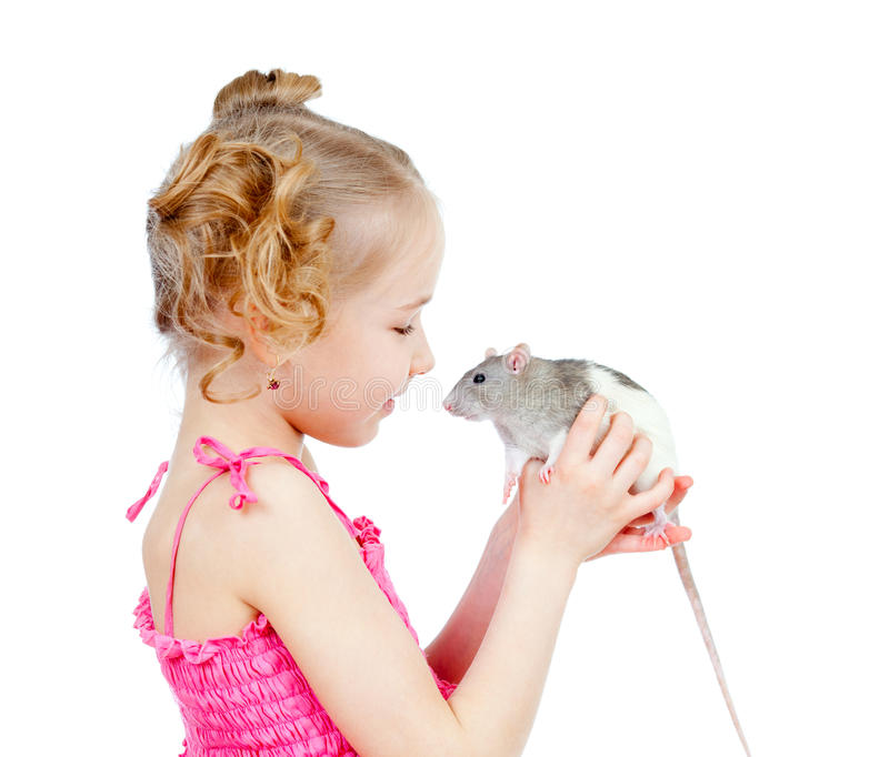 Adorable child girl with domestic rat pet. Adorable child with domestic rat isolated on white background stock image