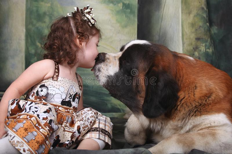 Adorable Child And Her Saint Bernard Puppy Dog Stock Photos