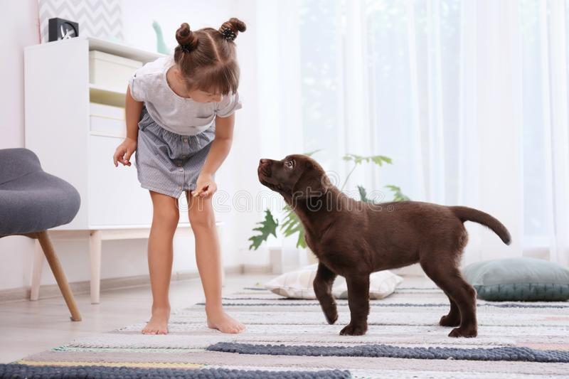 Adorable chocolate labrador retriever and little girl. At home royalty free stock image