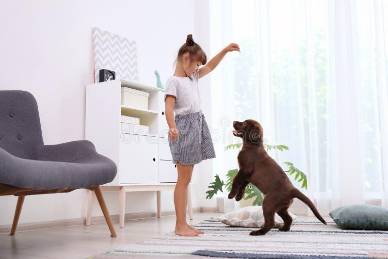 Adorable chocolate labrador retriever and little girl. At home stock image