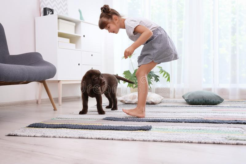 Adorable chocolate labrador retriever and little gir. L at home stock images