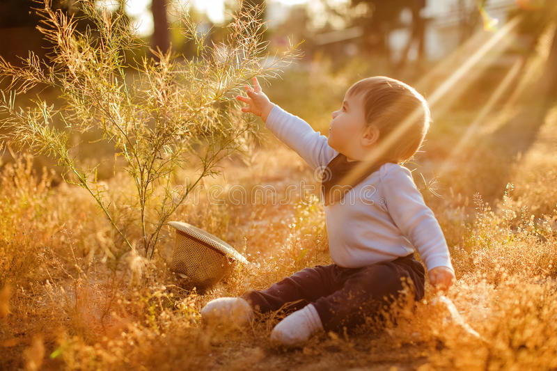 Adorable chubby little baby boy sitting in the grass and reaching into the Bush on the sunset sunlight stock photo