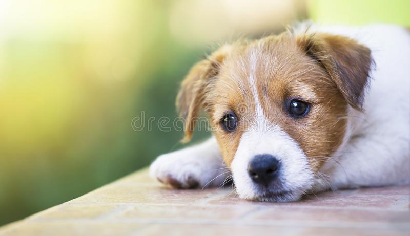 Adorable cute pet puppy thinking - dog therapy concept stock image