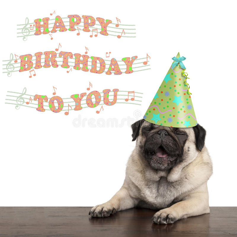 Adorable cute pug puppy dog singing happy birthday to you. Isolated on white background stock image