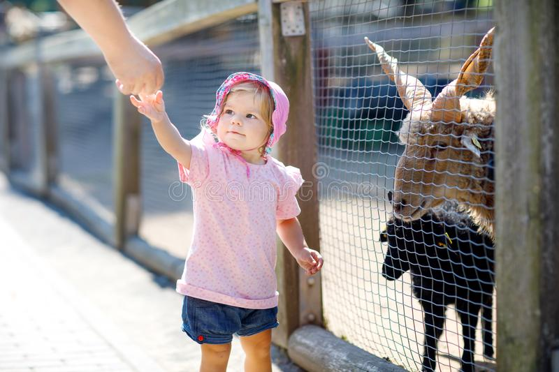 Adorable cute toddler girl feeding little goats and sheeps on a kids farm. Beautiful baby child petting animals in the royalty free stock photo