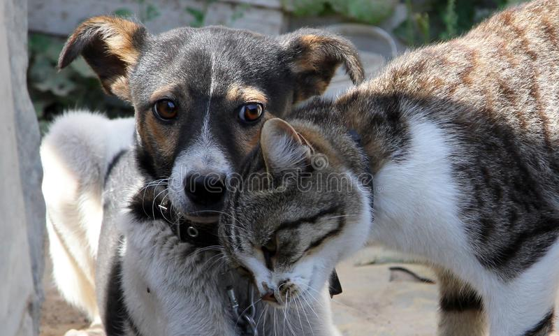 Adorable dog and cat playing together royalty free stock image