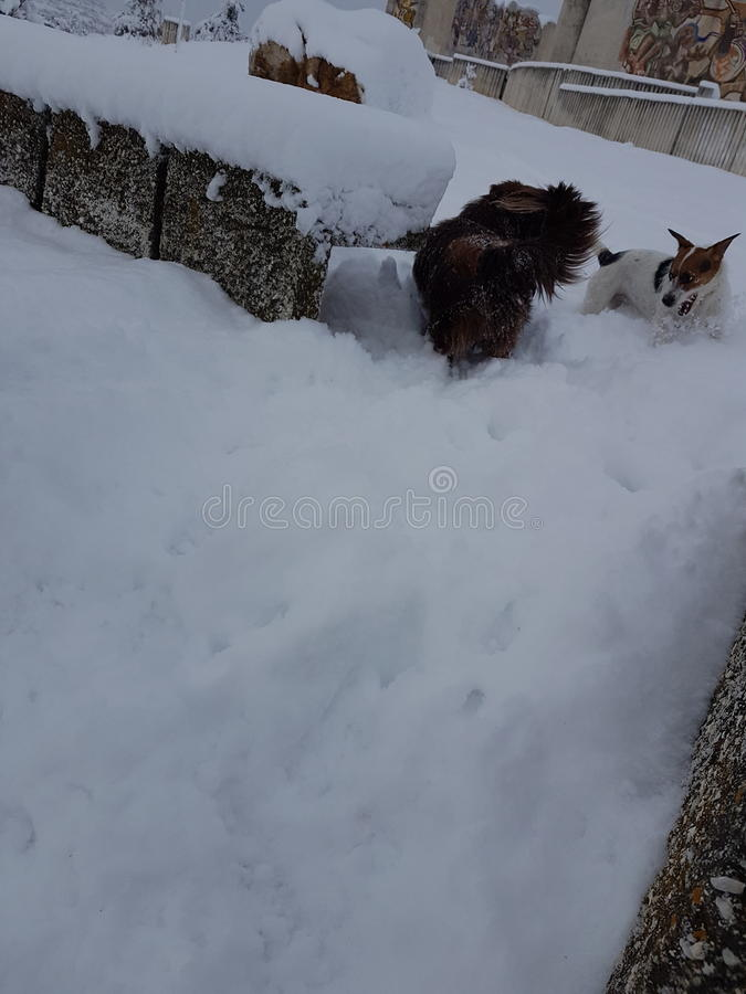 Adorable dogs in winter royalty free stock photo