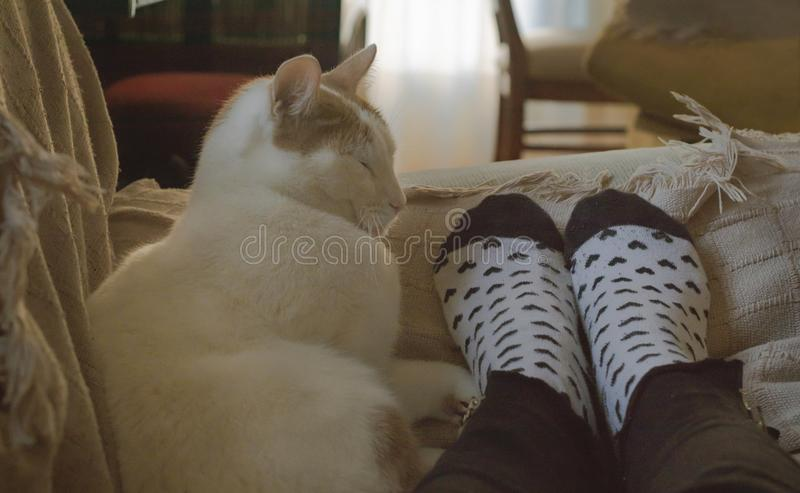 Adorable domestic cat sleeping together of human feet with hearts socks. Adorable domestic cat sleeping together from human feet with hearts socks on a sofa stock photography