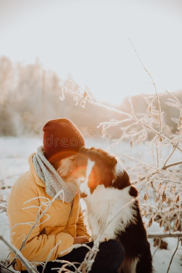 Adorable fluffy cute black and white border colly being trained and petting girl in a park. lights and bushes on the royalty free stock photos
