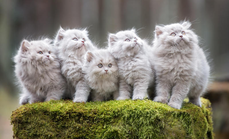 Adorable fluffy kittens outdoors. Fluffy kittens posing outdoors in autumn stock image