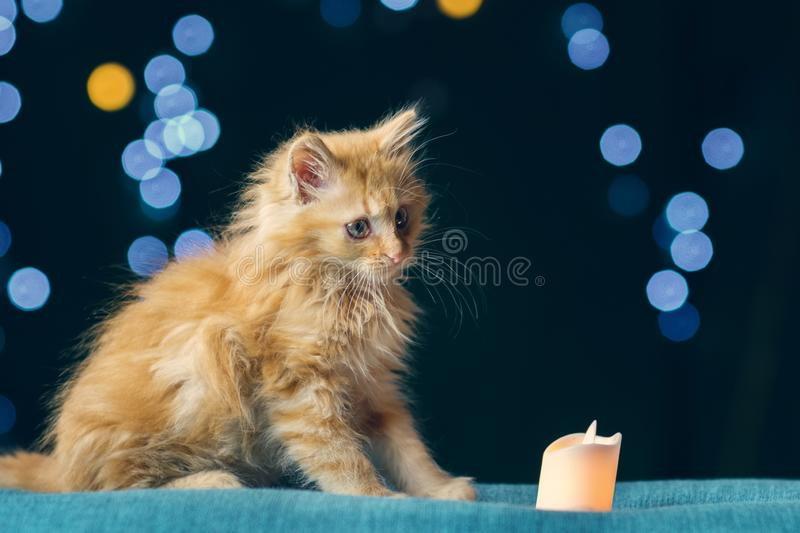 Adorable fluffy red kitten. Is looking at the candle, soft focus stock photos