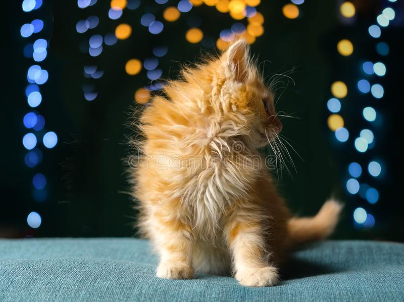Adorable fluffy red kitten. Soft focus stock photo