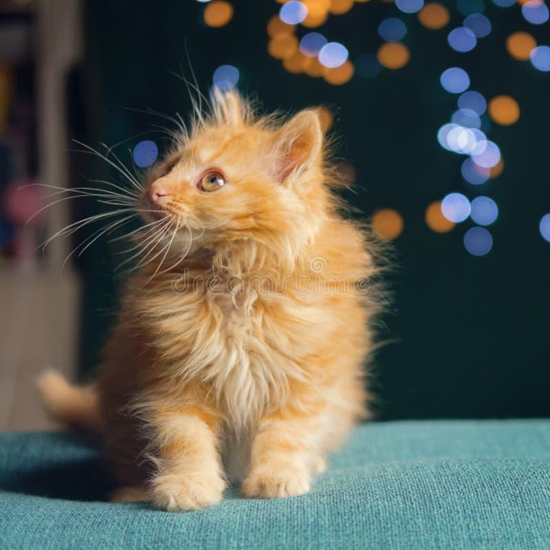 Adorable fluffy red kitten. Soft focus stock image