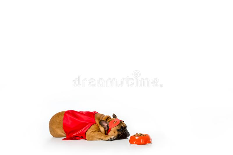 adorable french bulldog in superhero costume lying near bowl full of dog food royalty free stock image