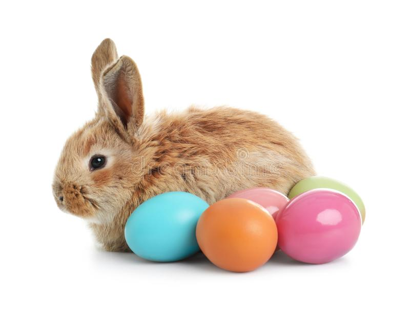 Adorable furry Easter bunny and colorful eggs. On white background stock photos