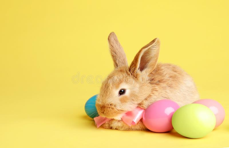 Adorable furry Easter bunny with cute bow tie and dyed eggs on color background. Space for text stock photos