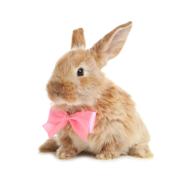 Adorable furry Easter bunny with cute bow tie royalty free stock images