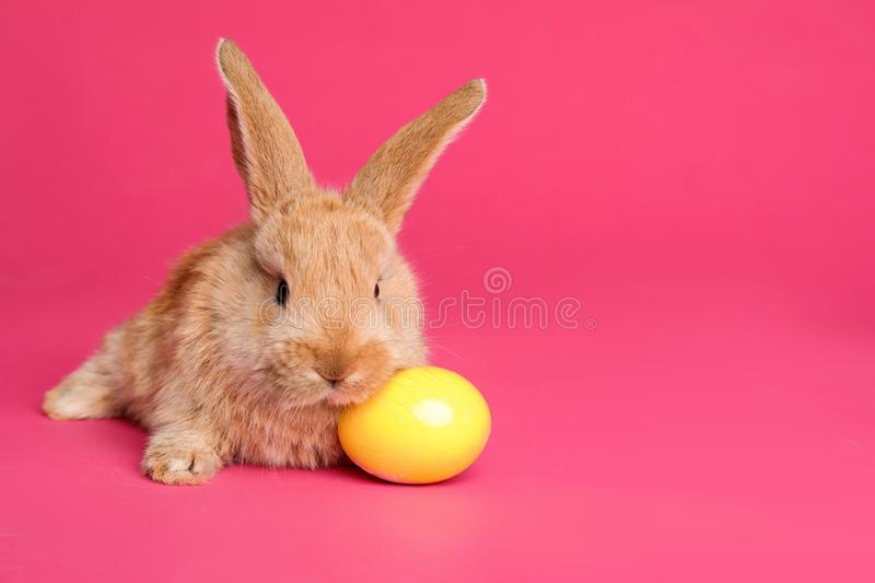 Adorable furry Easter bunny and dyed egg on color background royalty free stock image