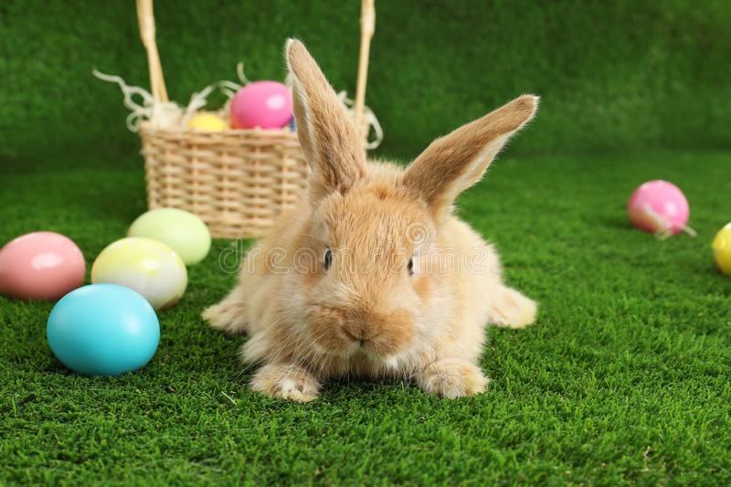Adorable furry Easter bunny near wicker basket and dyed eggs royalty free stock photos