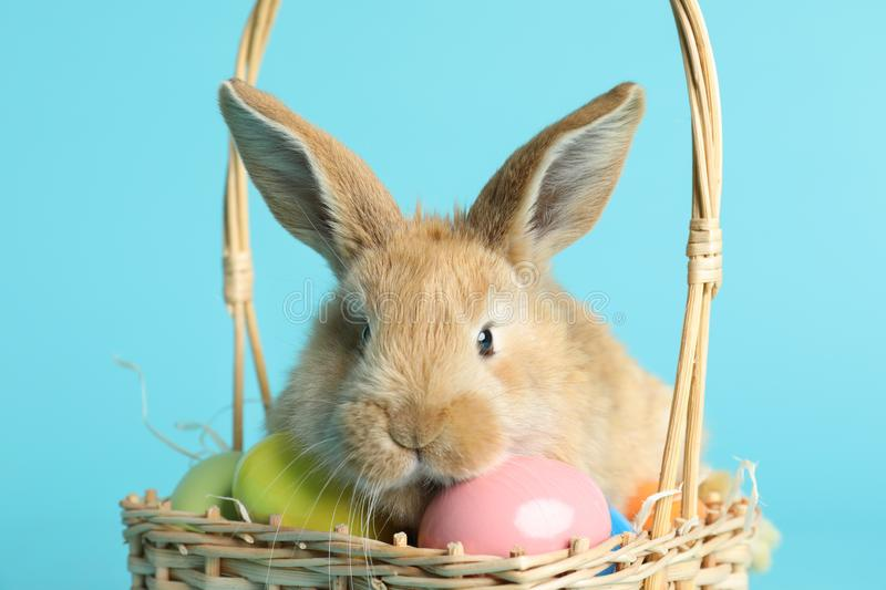 Adorable furry Easter bunny in wicker basket with dyed eggs on color background royalty free stock image