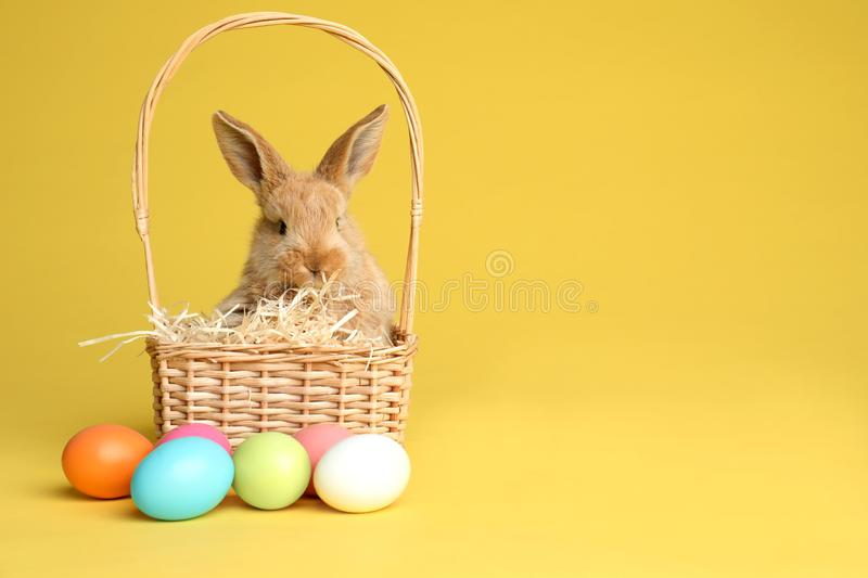 Adorable furry Easter bunny in wicker basket and dyed eggs on color background stock images
