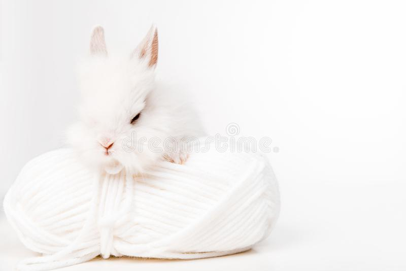 Adorable furry rabbit and ball of yarn isolated on white stock images