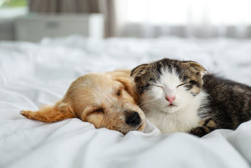 Adorable gatito y cachorro durmiendo en la cama fotografía de archivo libre de regalías