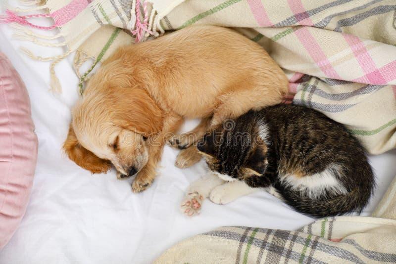 Adorable gatito y cachorro durmiendo en la cama imagenes de archivo