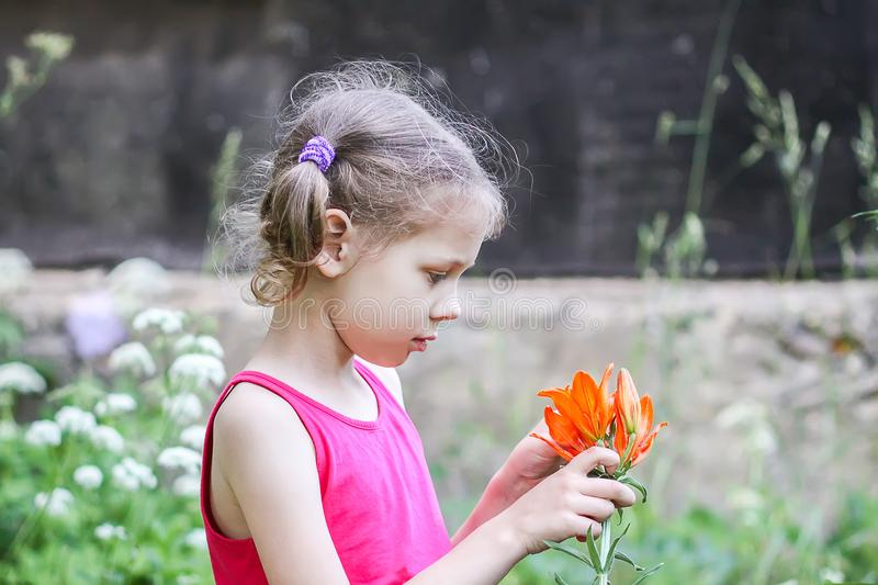 Adorable girl with orange lily flower outdoors in countryside at summer. Child holding garden plant. Adorable little girl with orange lily flower outdoors in royalty free stock photo