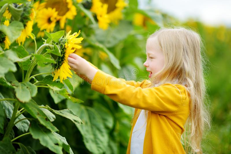 Adorable girl playing in blooming sunflower field on beautiful summer day. stock photos