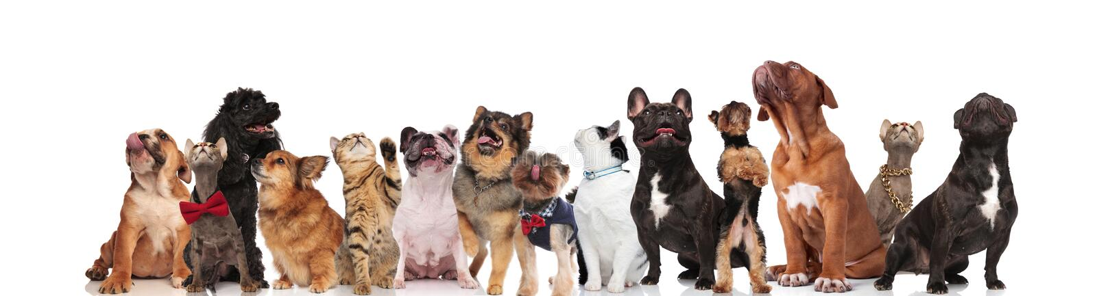 Adorable group of curious cats and dogs look up royalty free stock image