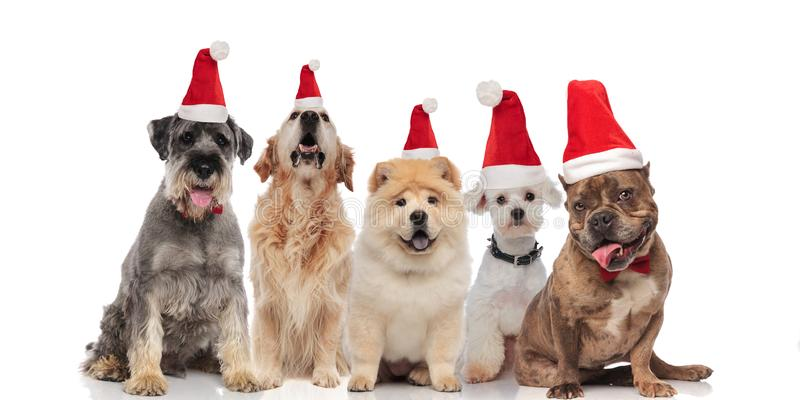 Adorable group of five santa dogs of different breeds stock photos