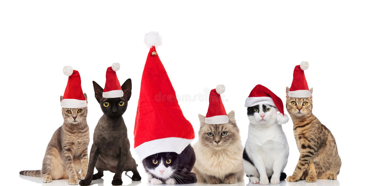 Adorable group of six santa cats sitting and standing stock photos